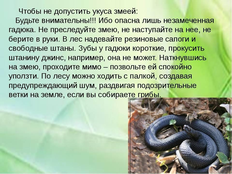 Укусили 3 змеи