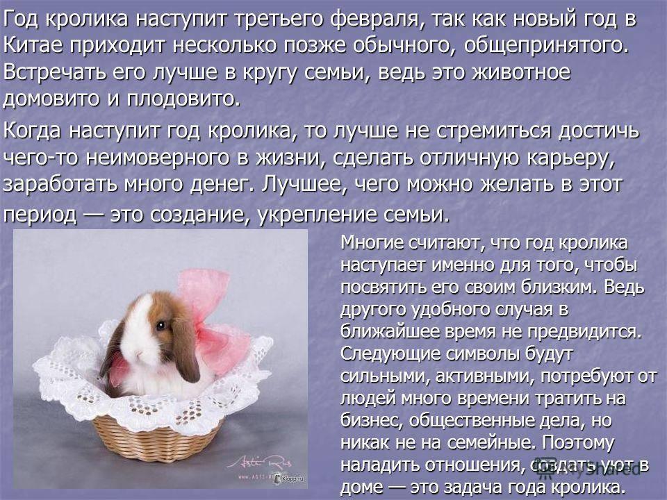 Год кролика: характеристика. когда наступает и будет следующий?