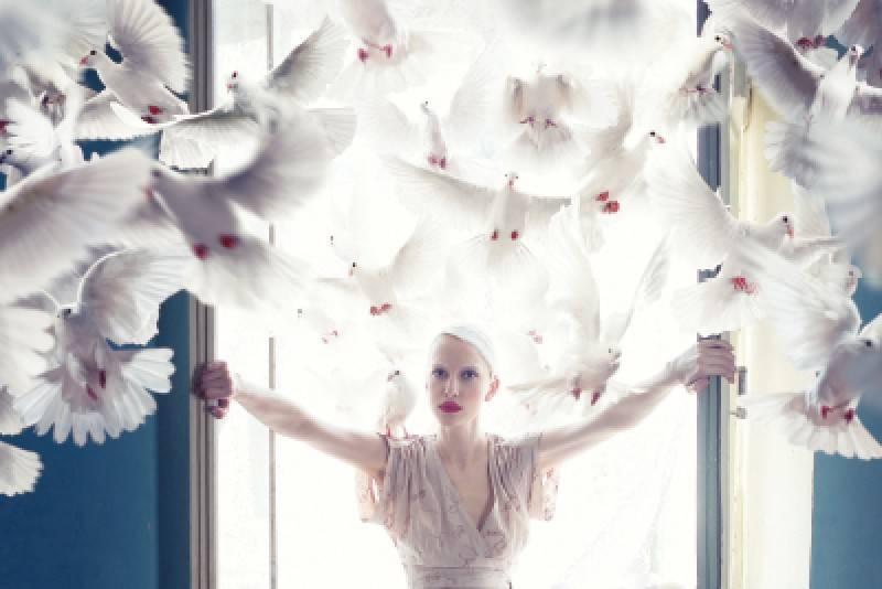 К чему снится голубь белый