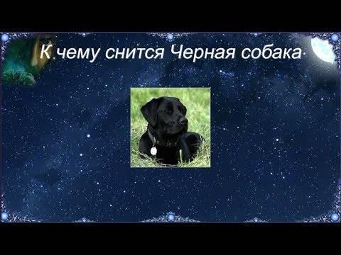 Сонник укусила домашняя собака во сне. к чему снится укусила домашняя собака во сне видеть во сне - сонник дома солнца