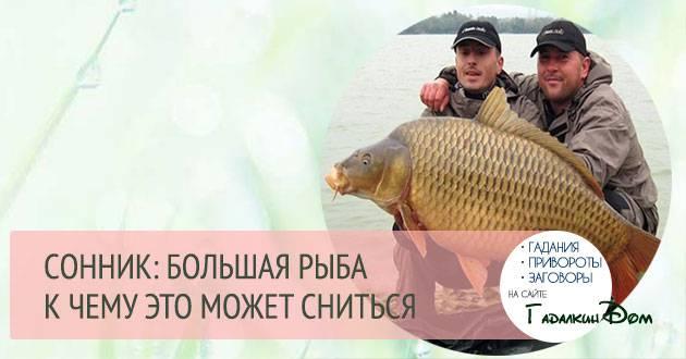 К чему снится большая рыба?