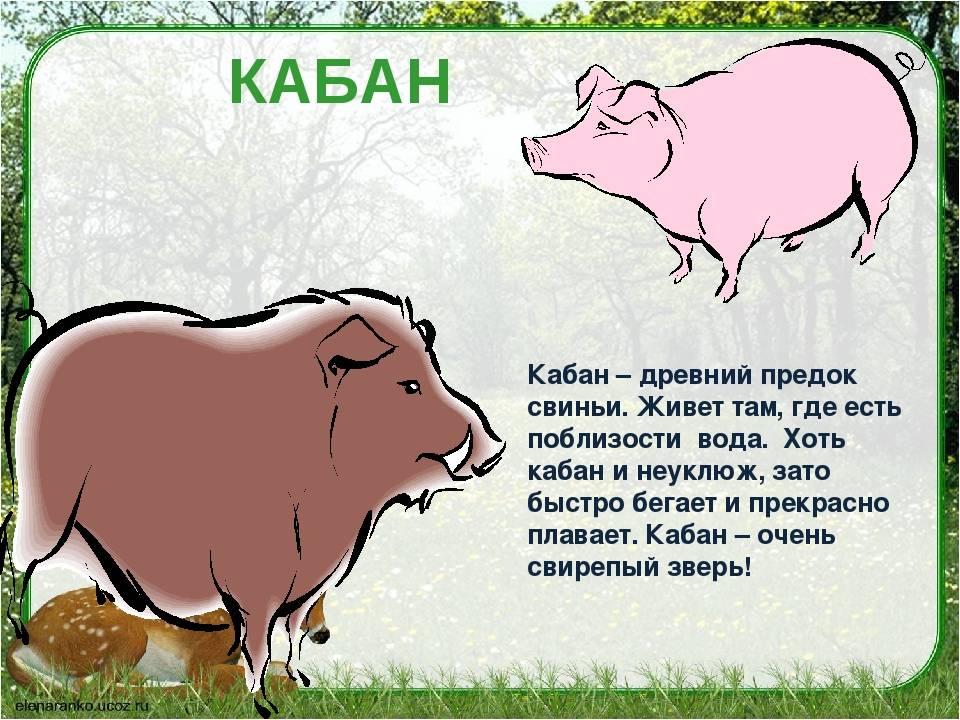 Овен-свинья (кабан) характеристика знака