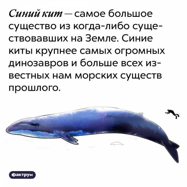 К чему снится кит ???? — топ 42 подробных толкований ✨ по популярным сонникам: что означает для мужчины или женщины видеть во сне в море белую или синюю китовую стаю