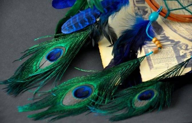 Можно ли держать перья павлина в доме: народные приметы