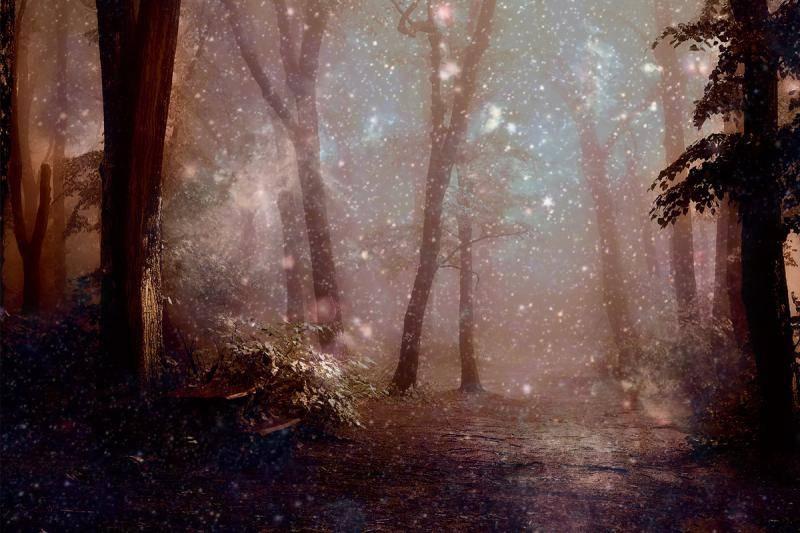 Сонник лес или к чему снится лес. видеть во сне лес