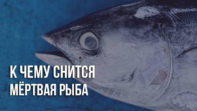 К чему снится рыба женщине или мужчине - толкование сна по сонникам