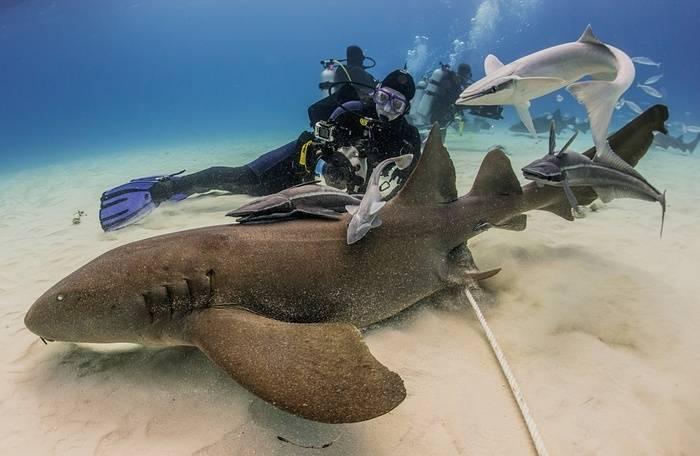 Видеть во сне акулу: стоит ли бояться неприятностей в реальной жизни?