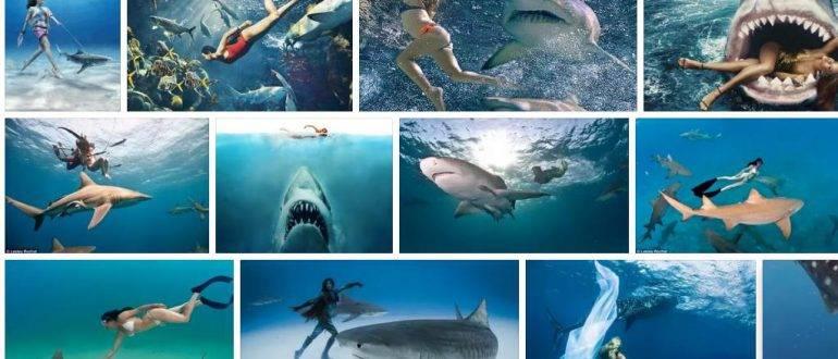 К чему снится акула во сне женщине или мужчине - толкование сна по сонникам