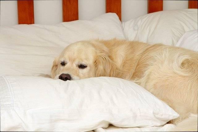 Сонник укусила белая собака. к чему снится укусила белая собака видеть во сне - сонник дома солнца