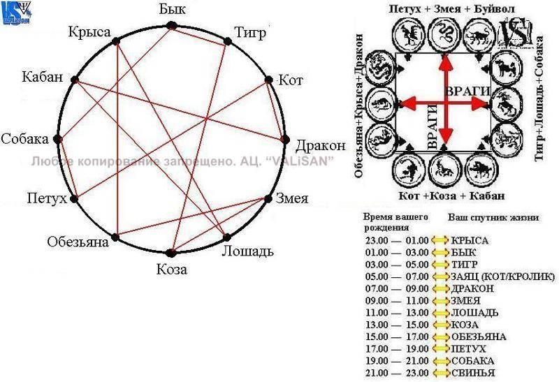 Китайский гороскоп по годам и стихиям: огонь, вода, дерево, металл, земля
