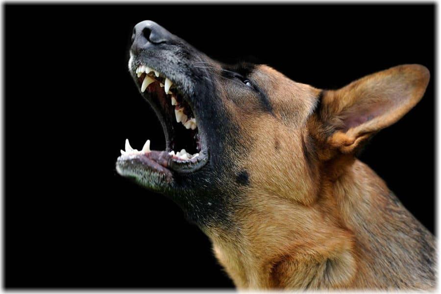 Стая собак напали