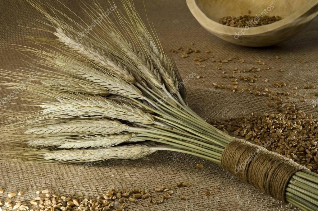 Гадание сноп пшеницы