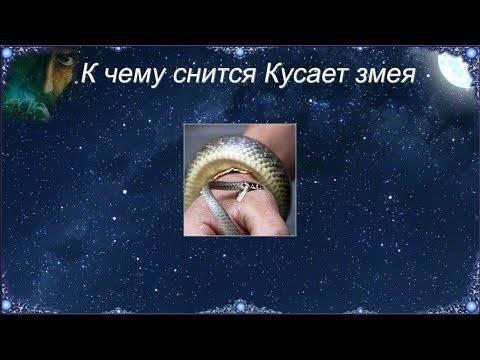 К чему снится змея по соннику? видеть во сне змею – толкование снов.