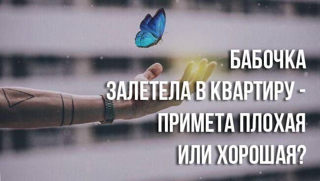 Примета, если бабочка залетела в окно квартиры