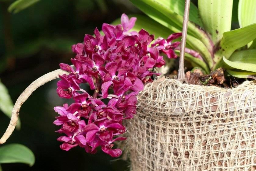 Орхидея в доме: приметы и суеверия, связанные с цветком