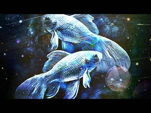 Характеристика знака зодиака рыбы - все о мужчинах и женщинах рыбах