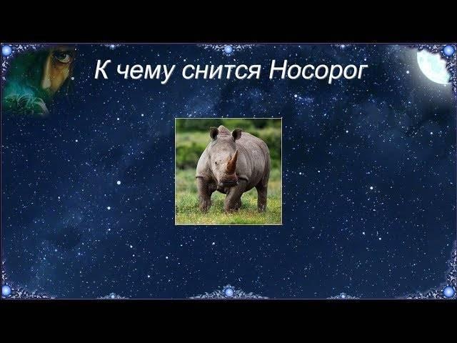 К чему снится бегемот?