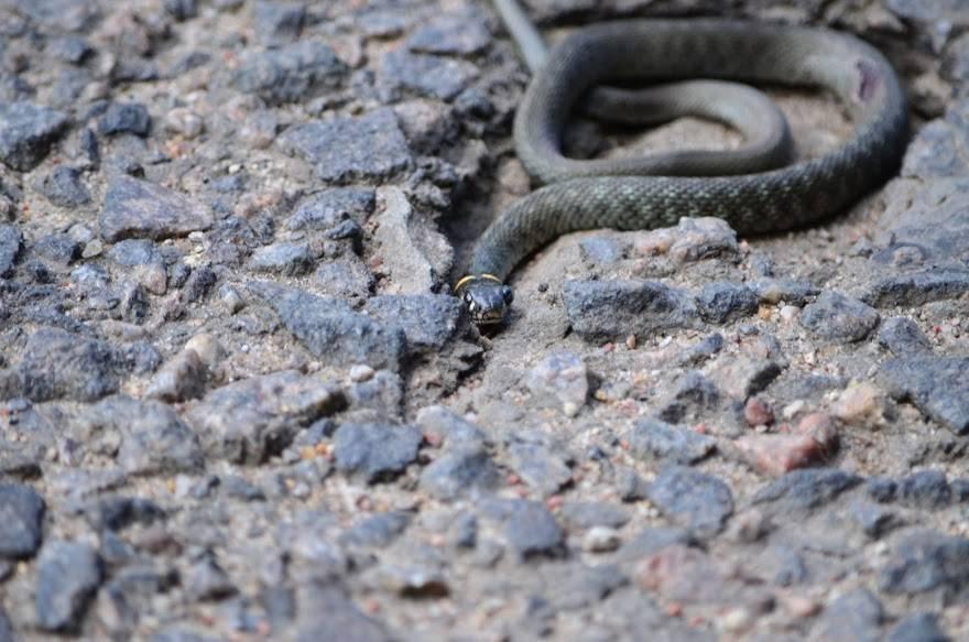 Сонник избежать укуса змеи. к чему снится избежать укуса змеи видеть во сне - сонник дома солнца