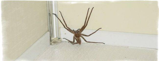 Мальчик в костюме человека-паука «залез» на потолок и стал звездой интернета