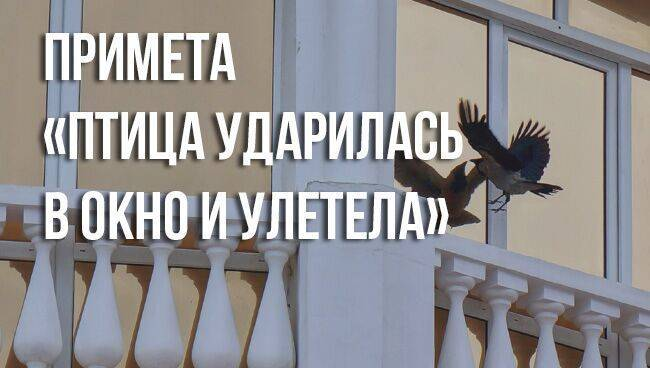 Птица залетела в дом через окно, дверь или дымоход: приметы и суеверия