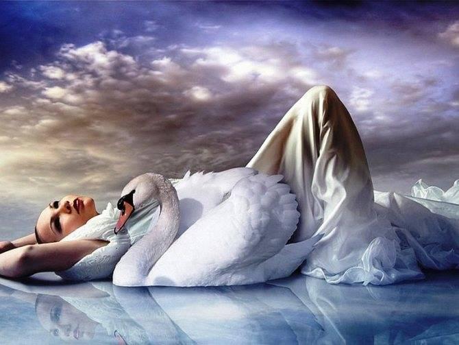 К чему снится птица женщине или мужчине - толкование сна по сонникам