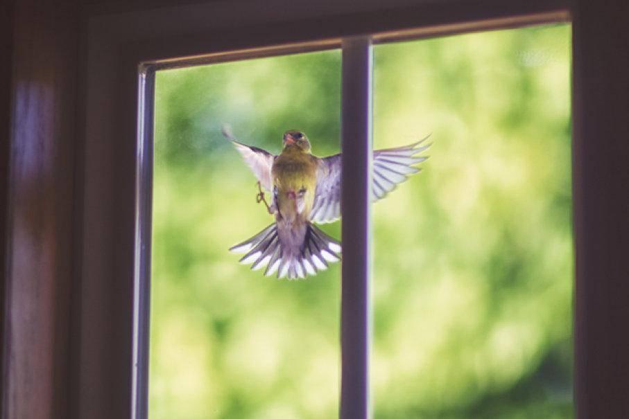 Соловей залетел в окно, в дом: толкование приметы
