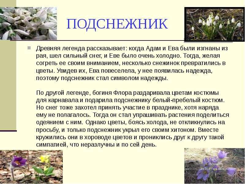 Славянский оберег цветок папоротника: значение, как выглядит символ перунов цвет