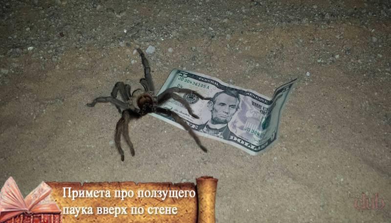 Полезные и важные приметы — паук ползет вверх