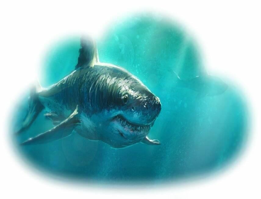 К чему снится акула по соннику? видеть во сне акулу – толкование снов.