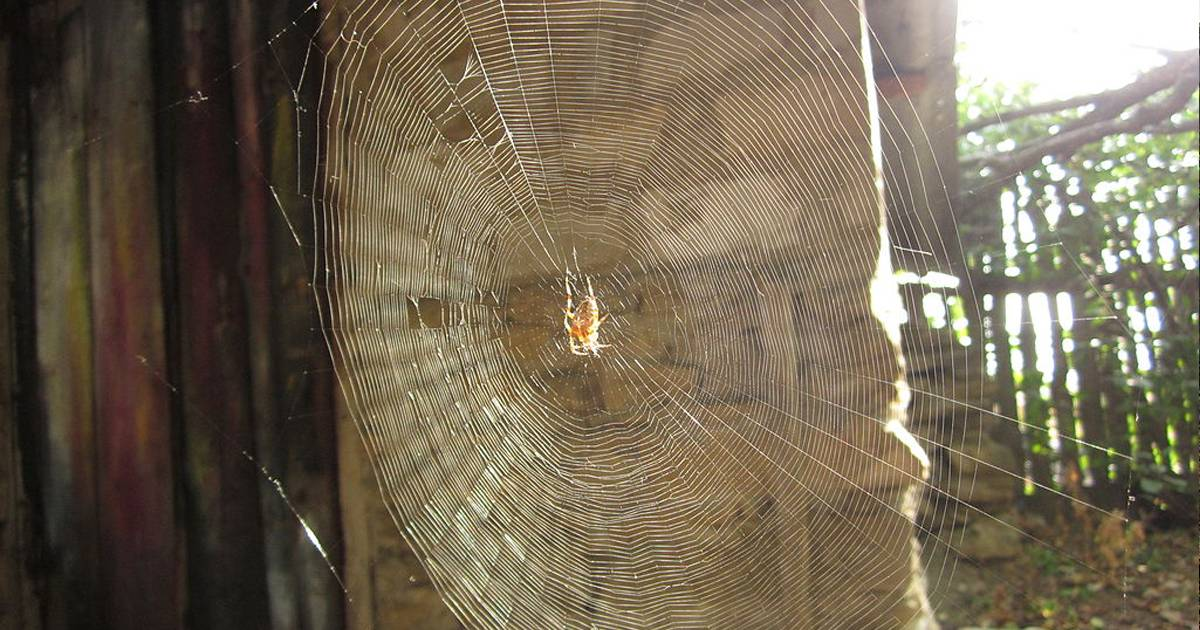 Почему появляются пауки в доме. какие виды пауков живут в квартире или доме
