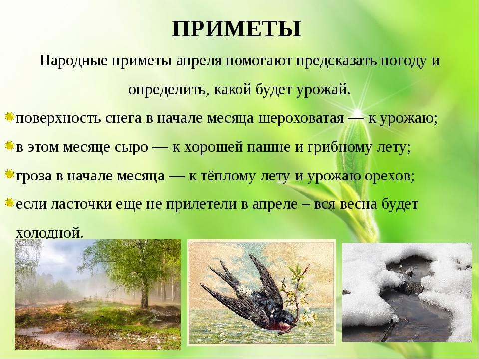 Популярные народные приметы о растениях