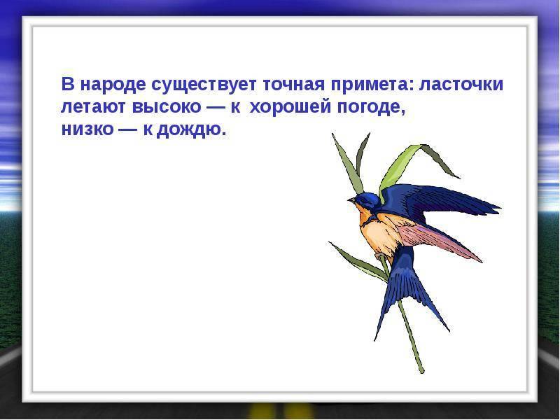 Много ласточек летает над домом. почему ласточки летают низко перед дождем