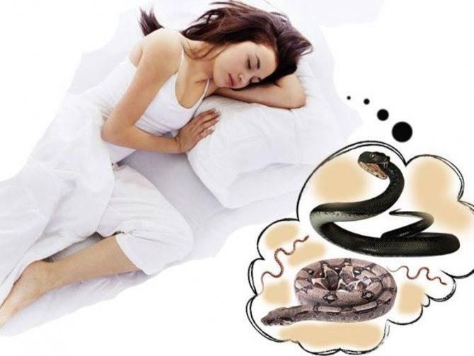 К чему снится уж по соннику? видеть во сне ужа  - толкование снов.