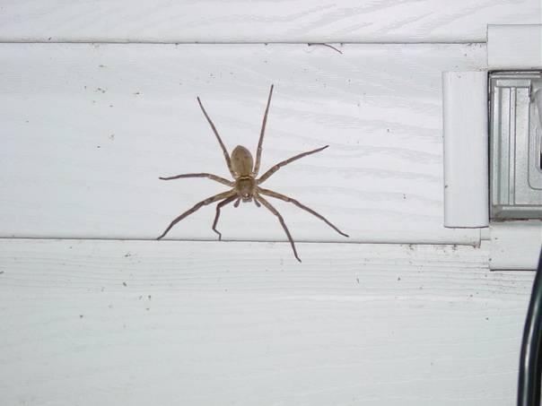 Почему нельзя убивать паука в доме