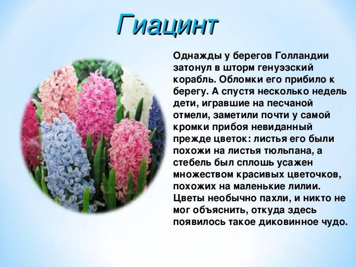 Легенды и поверья о весенних цветах разных стран