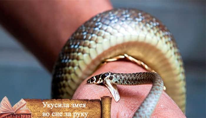 Сонник укусила белая змея. к чему снится укусила белая змея видеть во сне - сонник дома солнца