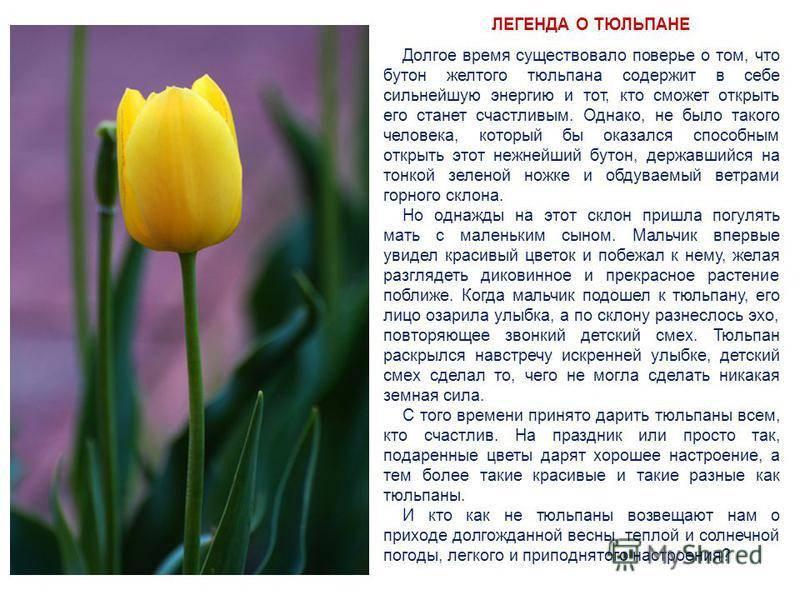Старинные поверья о цветах — символах весны. радостный цветок