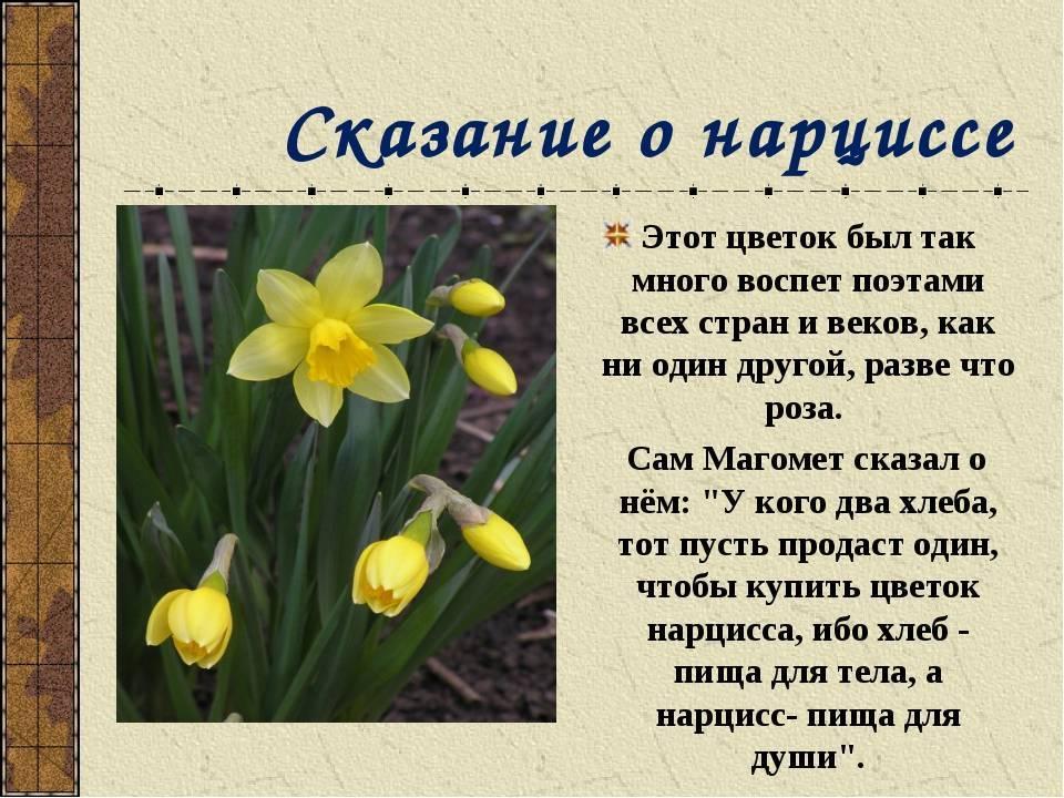 Легенды о цветах: ирис, мак, астра, ландыш, гиацинт, сирень, подснежник