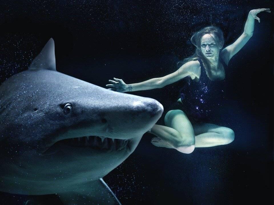 К чему снится акула, что акулы преследуют и кусают во сне? основные толкования - к чему снится акула чёрная или белая - автор екатерина данилова - журнал женское мнение