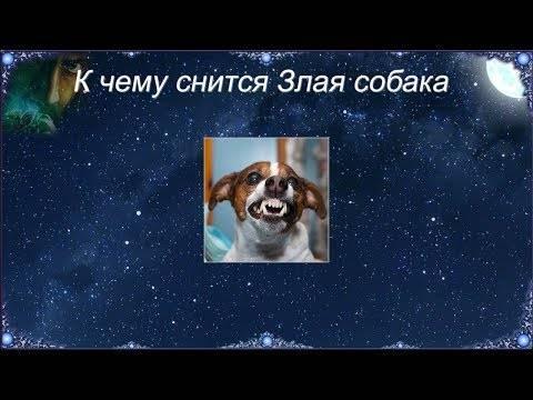 Сонник: напала собака, отбиваться от собак. толкование снов - tolksnov.ru