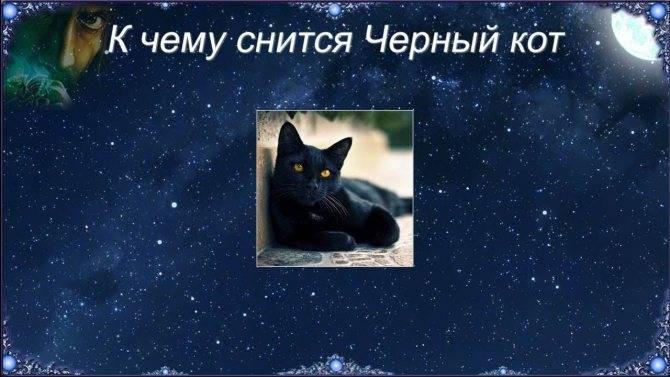 Приснился огромный чёрный кот