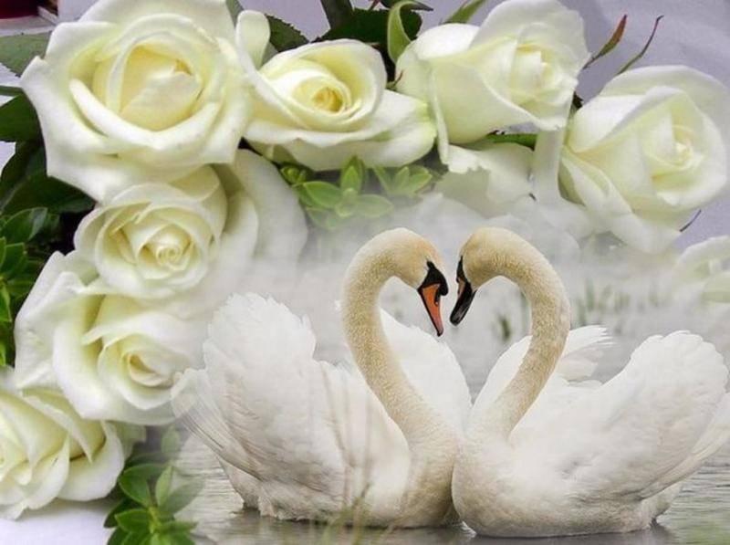 День семьи, любви и верности в 2021 году, какого числа в россии
