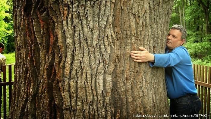 Лесные деревья - доноры и деревья - вампиры