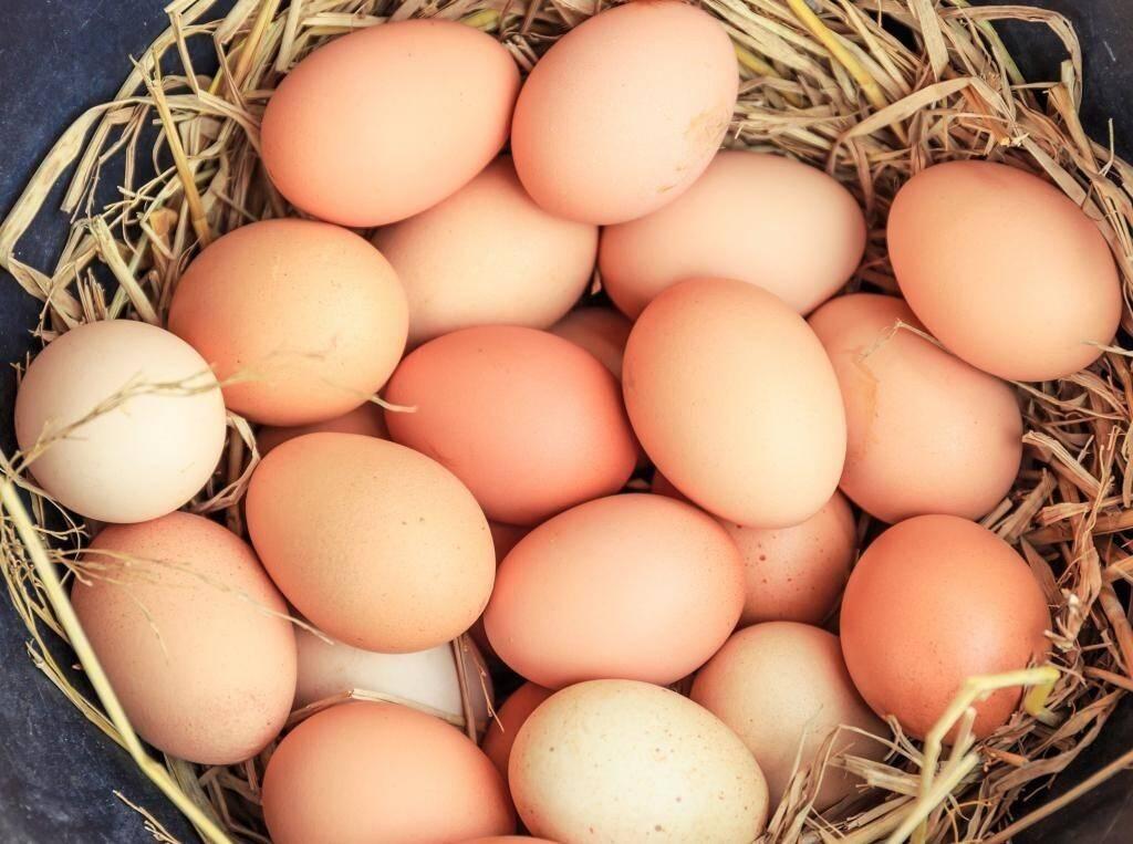 К чему снится собирать яйца по соннику? видеть во сне, что собирают яйца – толкование снов.