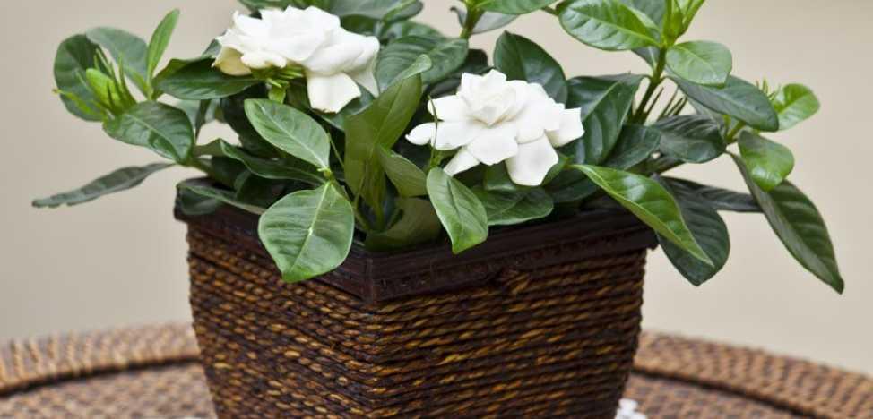 Положительные и негативные приметы и суеверия про различные цветы в доме