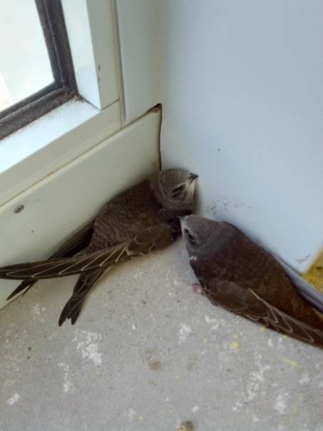 Примета залетела птичка в окно дома, квартиры, офиса, кабинета, машины