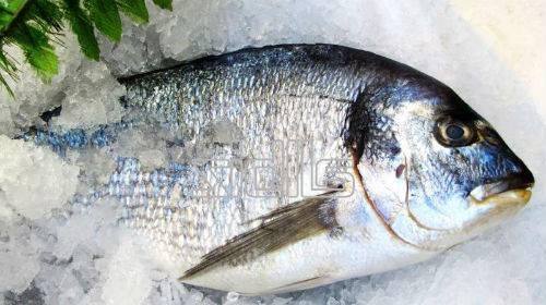 Ловить замороженную рыбу во