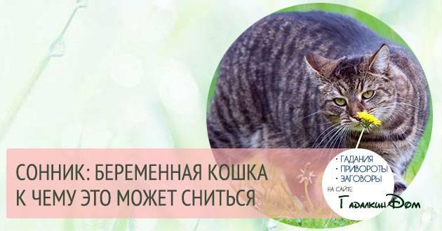 Сонник много серых котят. к чему снится много серых котят видеть во сне - сонник дома солнца