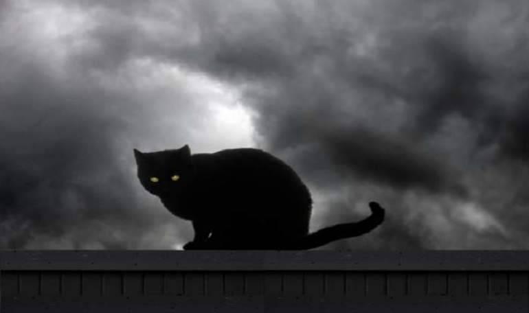 Сонник черные кошки много. к чему снится черные кошки много видеть во сне - сонник дома солнца