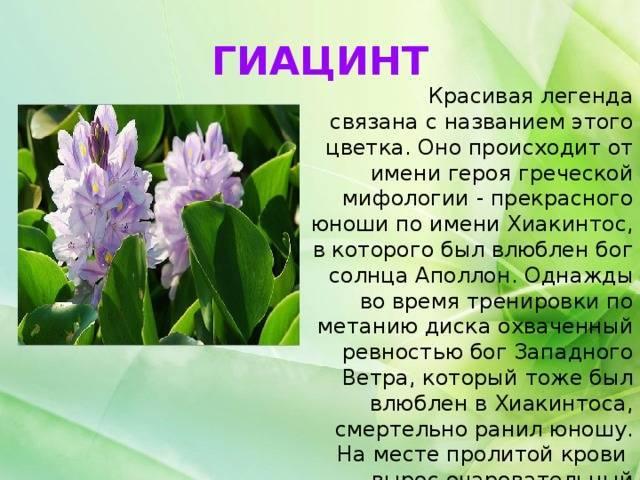 Растения осенних цветников: названия и фото, легенды и поверья
